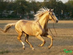 Image result for don horse
