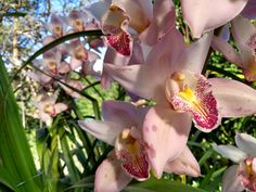 Flores en La Aguada