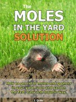 1000+ images about Moles in the yard Solution on Pinterest | Mole ...