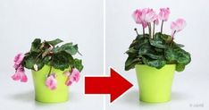 Bring Your Wilted Flowers Back To Life With Only Three Ingredients The Plant Guide Çocuk Odası Wilted Flowers, Flower Pot Design, Plant Guide, Plant Lighting, Hardy Plants, Plantar, Plant Needs, Latte Art, Body Wraps