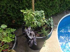 Ju Pots, Bette, Pot Jardin, Gardens, Parsley, Basil, Purple, June, Accessories