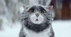 Mog's Christmas Calamity - We Love Cats and Kittens Christmas Adverts, Christmas Books, Christmas Cats, Family Christmas, Christmas Ideas, Merry Christmas, Fat Cats, Cats And Kittens, Kitty Cats
