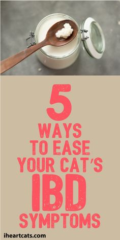 5 Ways To Ease Your Cat's IBD Symptoms