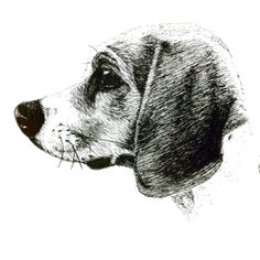 My beagle. Drawn with Pen/Ink.