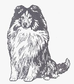 """Dog Rubber Stamp - Shetland Sheepdog-1E (Size: 1-3/4"""" Wide X 2-1/4"""" Tall) >>> Continue to the product at the image link."""