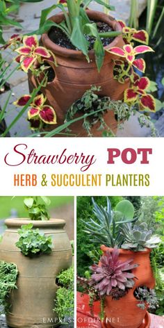 Strawberry pots can be used for a variety of plants including various herbs, perennials, and annuals. #gardening #gardenideas #containers #planters #strawberrypots #creativegardening #gardentips #empressofdirt