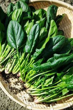 Green leafy vegetables are packed full or invaluable nutrition. Some of the healthiest greens you can eat are: brussel sprouts, kale, broccoli and spinach. Easy Vegetables To Grow, Winter Vegetables, Fruits And Vegetables, Veggies, Warm Spinach Salads, Bacon Spinach Salad, Spinach Rice, Edible Garden, Fruit Trees