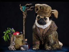 Radagast the Brown Pug ~ #Hobbit #Tolkien | via Something Awful