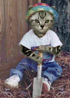 Funny cats pics(8 photo)