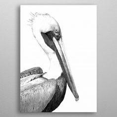 Black and White Pelican by Alemi Prints | metal posters - Displate