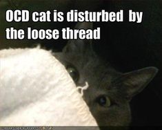 Funny OCD Pictures