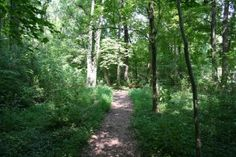 The nature trail through the woods ...
