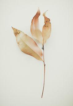 Botanical Drawings, Botanical Art, Botanical Illustration, Painting & Drawing, Watercolor Paintings, Watercolour, Illustration Botanique, Arte Floral, Leaf Art