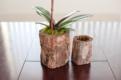 Love these organic planters made from tree trunks.