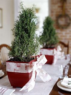 Pair of mini rosemary trees in red pots tied with ribbon