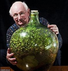 David Latimer buried seedlings of spiderworts or tradescantia in a huge jar in 1960, not watered in 40 years, but still flourishing. The astonishing results of a plant experiment started nearly 53 years ago to test a theory that plants can survive in a self-contained environment. The plant absorbs solar energy from daylight, water from the moisture it creates and carbon dioxide and nutrients from rotting leaves it drops and it produces oxygen.    Posted by www.GoMadideas.com #GoMad