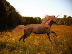 golden unicorn #fantasy