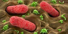 100 Billionen Mikroorganismen bevölkern unseren Darm: Überwiegend Bakterien, aber auch Viren und Pilze. Diese Lebensgemeinschaft von Mikroorganismen wird Darmflora oder auch Mikrobiom genannt.