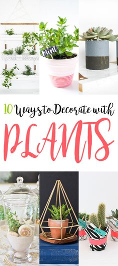 Adding a little bit of green to your home decor is always a great idea! If you have a black thumb…lean more to the succulent variety of plants and then if you have a thumb that is golden…the sky is the limit! Today we have a pretty collection of some ways to display your greenery… …