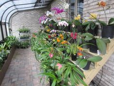 new shelves for greenhouse - Orchid Forum by The Orchid Source