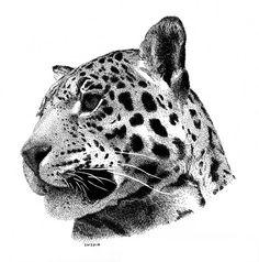 Jaguar with Watercolor Wash, Scott Woyak Animal Sketches, Animal Drawings, Art Sketches, Jaguar Tattoo, Tiger Tattoo, Dotted Drawings, Ink Pen Drawings, Stippling Drawing, Leopard Tattoos