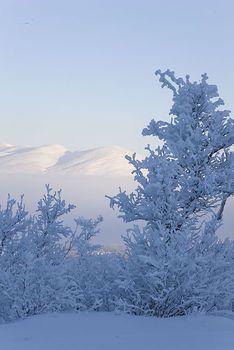 Winter landscape, Abisko National Park, Swedish Lapland