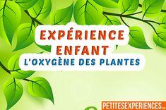 Une expérience scientifique pour jeune sur le thème du monde végétal. Nous allons pouvoir observer l'oxygène de plante grâce à cette expérience :