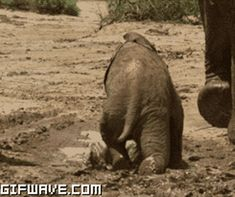 This baby elephant who's not quite runway ready: | 12 Animals Having Way Too Much Fun Getting Messy