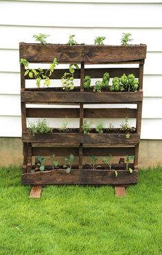 15 Tips And Tricks For Growing Herbs You Need To Know | Postris