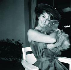 Chats des célébrités - Sophia Loren et son chat persan : Album photo - aufeminin.com : Album photo - aufeminin.com - aufeminin
