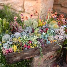 The Effective Pictures We Offer You About garden pot design planters A quality picture can tell you Succulents In Containers, Cacti And Succulents, Planting Succulents, Cactus Plants, Garden Plants, Indoor Plants, House Plants, Planting Flowers, Colorful Plants