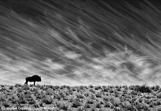 Wildlife Photographer of the Year 2010, Morkel Erasmus (South Africa), Desert survivor, Black & White - Highly Commended