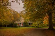 #autumn #colorful #flora #forest #house #nature #trees #woods
