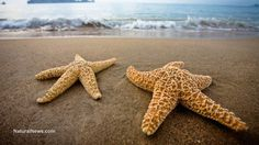 Starfish now devouring themselves as life on planet Earth reaches crisis point