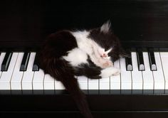 A small kitten sleeping on the keys of a piano.