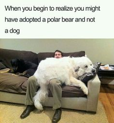 This dog must be lazyone