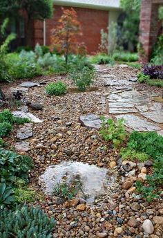 Rain Garden Gallery - Dubberley Landscape - Plano, Texas #lowmaintenancelandscapetexas