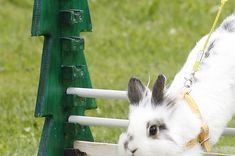And they can be even sweeter when they are in bonded pairs. | 21 Reasons Why Bunnies Are Actually The Best Pets