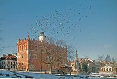 Sandomierskie gołębie - Sandomierz