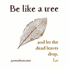 """Be like a tree and let the dead leaves drop."" ~ RUMI"