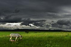 Umgeni Valley Nature Reserve, December 25, 2010 in Howick, Kwazulu Natal, ZA. by Marc Peter