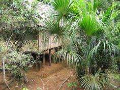 "The Sachamama Center and ""Heaven and Earth"" welcome you. All year round we organize shamanic journeys to Francisco's native village of Tamanco, which is located half way between Iquitos and Pucallpa. The goal of these journeys is to share the shamanic tradition still alive in this faraway place and offer the participants the possibility of read more"