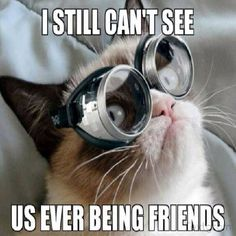 This article lists out 10 Grumpy Cat memes that will make your day. This article also tells you the things that you did not know about Grumpy Cat. Grumpy Cat Quotes, Funny Grumpy Cat Memes, Funny Cats, Cute Cats, Funny Animals, Grumpy Kitty, Grump Cat, Funniest Animals, Cat Fun