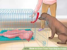 Image titled Crate Train Your Dog or Puppy Step 10