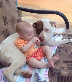 "My response to people who say pitt bulls are born ""vicious"". Dogs are products of their environment. Bad owner means bad dog. - 9GAG"
