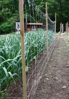 7 DIY Vertical Gardening Techniques for Healthier Veggies