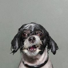 wetdog9