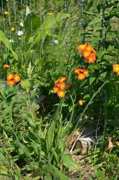 To understand your soil, learn to read your weeds