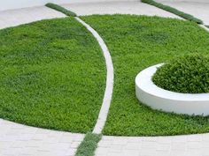How to Make Lawn of Groundcover