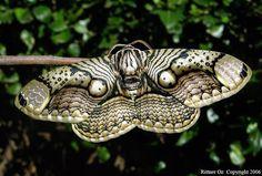 Moth - beautiful markings!